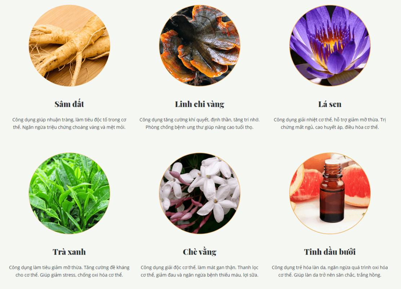 Thành phần trà thảo mộc giảm cân Vy&Tea